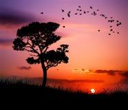 Puesta del sol hermosa de la naturaleza stock de ilustración