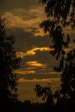 Puesta del sol hermosa de la silueta por la tarde y el árbol Imagen de archivo