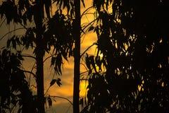 Puesta del sol hermosa de la silueta por la tarde y el árbol Imagen de archivo libre de regalías