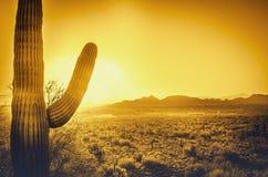 Puesta del sol hermosa del desierto de Arizona Imagenes de archivo