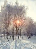 Puesta del sol hermosa del invierno con los árboles en la nieve Fotografía de archivo