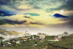 Puesta del sol hermosa del jardín de té Imagenes de archivo