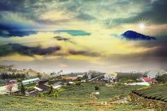 Puesta del sol hermosa del jardín de té Imagen de archivo libre de regalías