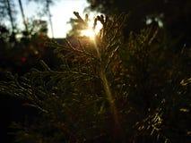 Puesta del sol hermosa detrás de la hoja de una planta imagenes de archivo