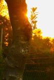 Puesta del sol hermosa detrás de los árboles Fotografía de archivo libre de regalías