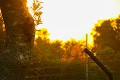 Puesta del sol hermosa detrás de los árboles Fotos de archivo