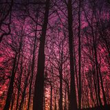Puesta del sol hermosa en bosque Foto de archivo