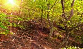 Puesta del sol hermosa en bosque de la primavera Fotografía de archivo
