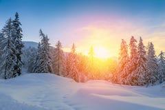 Puesta del sol hermosa en bosque del invierno Fotografía de archivo