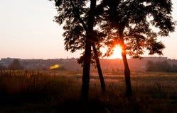 Puesta del sol hermosa en el bosque, haber filtrado retra, estilo del instagram imagenes de archivo