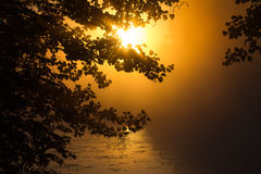 Puesta del sol hermosa en el bosque la belleza encantadora de la naturaleza Imagen de archivo libre de regalías