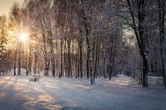 Puesta del sol hermosa en el parque de la ciudad Foto de archivo