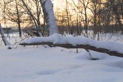 Puesta del sol hermosa en el parque del invierno, árboles, nieve Imágenes de archivo libres de regalías