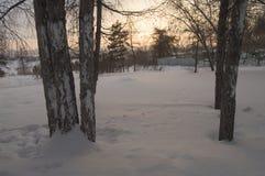 Puesta del sol hermosa en el parque del invierno, árboles, nieve Imagen de archivo libre de regalías
