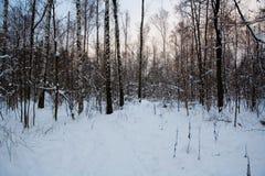Puesta del sol hermosa en el parque nevoso del invierno imagen de archivo