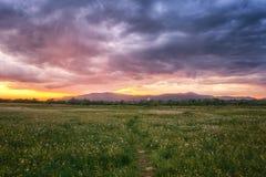 Puesta del sol hermosa en el valle floreciente, el paisaje escénico con las flores crecientes salvajes y el cielo nublado del col imagenes de archivo