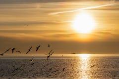 Puesta del sol hermosa en la costa de mar en tonos amarillos y gaviotas del vuelo en el primero plano imagenes de archivo