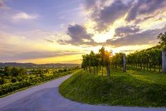 Puesta del sol hermosa en los viñedos del valle de Vipava, Eslovenia Fotografía de archivo