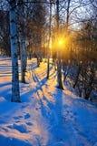 Puesta del sol hermosa en un parque del invierno Fotos de archivo