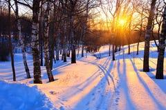 Puesta del sol hermosa en un parque del invierno Foto de archivo libre de regalías