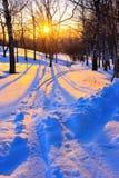 Puesta del sol hermosa en un parque del invierno Imagen de archivo