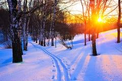 Puesta del sol hermosa en un parque del invierno Fotografía de archivo