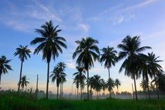 Puesta del sol hermosa en un tropical Imágenes de archivo libres de regalías