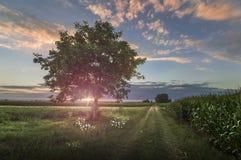 Puesta del sol hermosa entre los campos de maíz Imagen de archivo libre de regalías