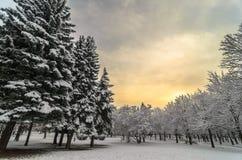 Puesta del sol hermosa del invierno con los árboles en la nieve Foto de archivo