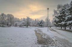 Puesta del sol hermosa del invierno con los árboles en la nieve Fotos de archivo libres de regalías