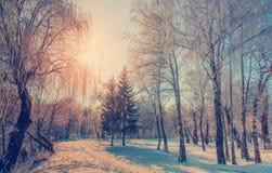 Puesta del sol hermosa del paisaje del invierno en invierno Fotografía de archivo libre de regalías
