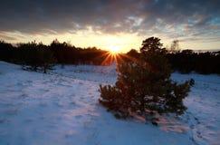 Puesta del sol hermosa sobre bosque nevoso del invierno Imagen de archivo