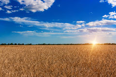 Puesta del sol hermosa sobre campo de trigo Imagenes de archivo