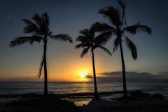Puesta del sol hermosa sobre el Océano Pacífico y tres palmas en Oahu imagen de archivo