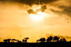 Puesta del sol hermosa sobre la sabana Foto de archivo libre de regalías