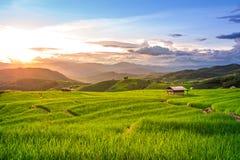 Puesta del sol hermosa sobre los campos de arroz fotos de archivo