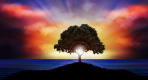 Puesta del sol hermosa sobre paisaje de la naturaleza de la silueta del árbol del agua Fotos de archivo libres de regalías