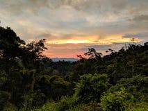 Puesta del sol hermosa sobre selva oscura imagen de archivo
