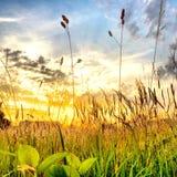 Puesta del sol hermosa sobre un campo Fotos de archivo libres de regalías