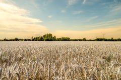 Puesta del sol hermosa y caliente sobre campo e iglesia de trigo Imagen de archivo