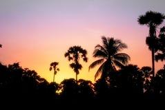 Puesta del sol hermosa y palmera imagenes de archivo