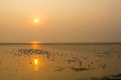 Puesta del sol hermosa y sihouette Foto de archivo libre de regalías