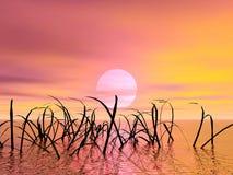 Puesta del sol. Hierba Foto de archivo libre de regalías