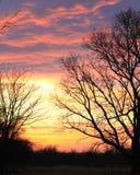 Puesta del sol imponente con la silueta del árbol Imágenes de archivo libres de regalías