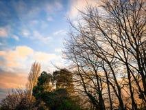 Puesta del sol inglesa de la tarde detrás de una mezcla de árboles grandes Foto de archivo libre de regalías