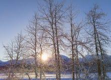 Puesta del sol del invierno a través de árboles de abedul Imagen de archivo libre de regalías