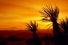 Puesta del sol, Joshua Tree National Park, los E.E.U.U. Fotografía de archivo