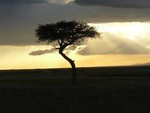 Puesta del sol Kenia Fotos de archivo