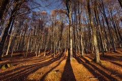 Puesta del sol ligera y sombras n la madera de hayas Imagen de archivo libre de regalías