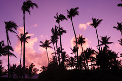 puesta del sol Lila-púrpura sobre el Océano Atlántico Siluetas de palmeras Imagen de archivo libre de regalías